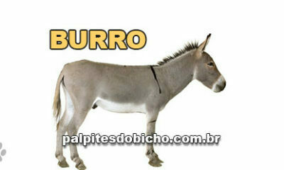 Palpites do Bicho Dia 30/06/2020 Tarde