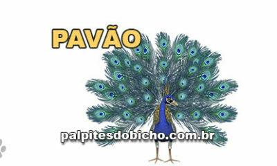 Palpites do Jogo do Bicho Dia 31/10/2020 Tarde