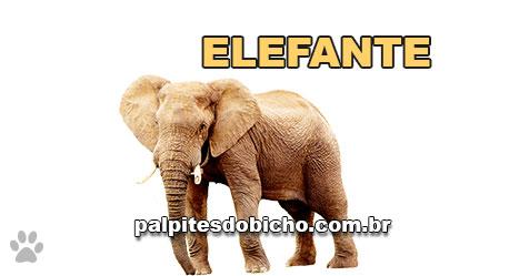 Palpites do Jogo do Bicho Dia 05/11/2020 Tarde