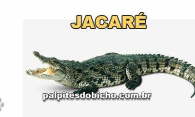 Palpites do Jogo do Bicho Dia 04/03/2021 Noite