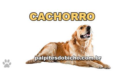 Palpites do Jogo do Bicho Dia 05-03-2021