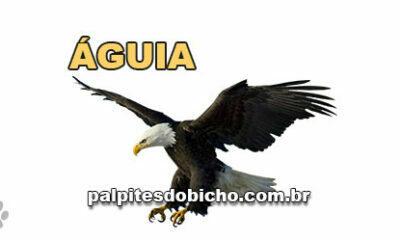 Palpites do Jogo do Bicho Dia 08/04/2021 Noite