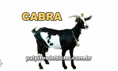 Palpites do Jogo do Bicho Dia 11/04/2021 Tarde