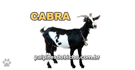 Palpites do Jogo do Bicho Dia 14/04/2021 Noite