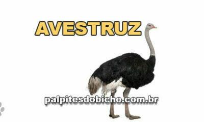 Palpites do Jogo do Bicho Dia 25/04/2021 Tarde