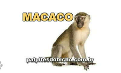 Palpites do Jogo do Bicho Dia 06/05/2021 Tarde