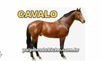 Palpites do Jogo do Bicho Dia 28/08/2021 Noite