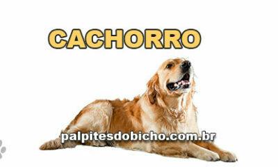 Palpites do Jogo do Bicho Dia 06/10/2021 Noite