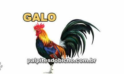 Palpites do Jogo do Bicho Dia 13-10-2021
